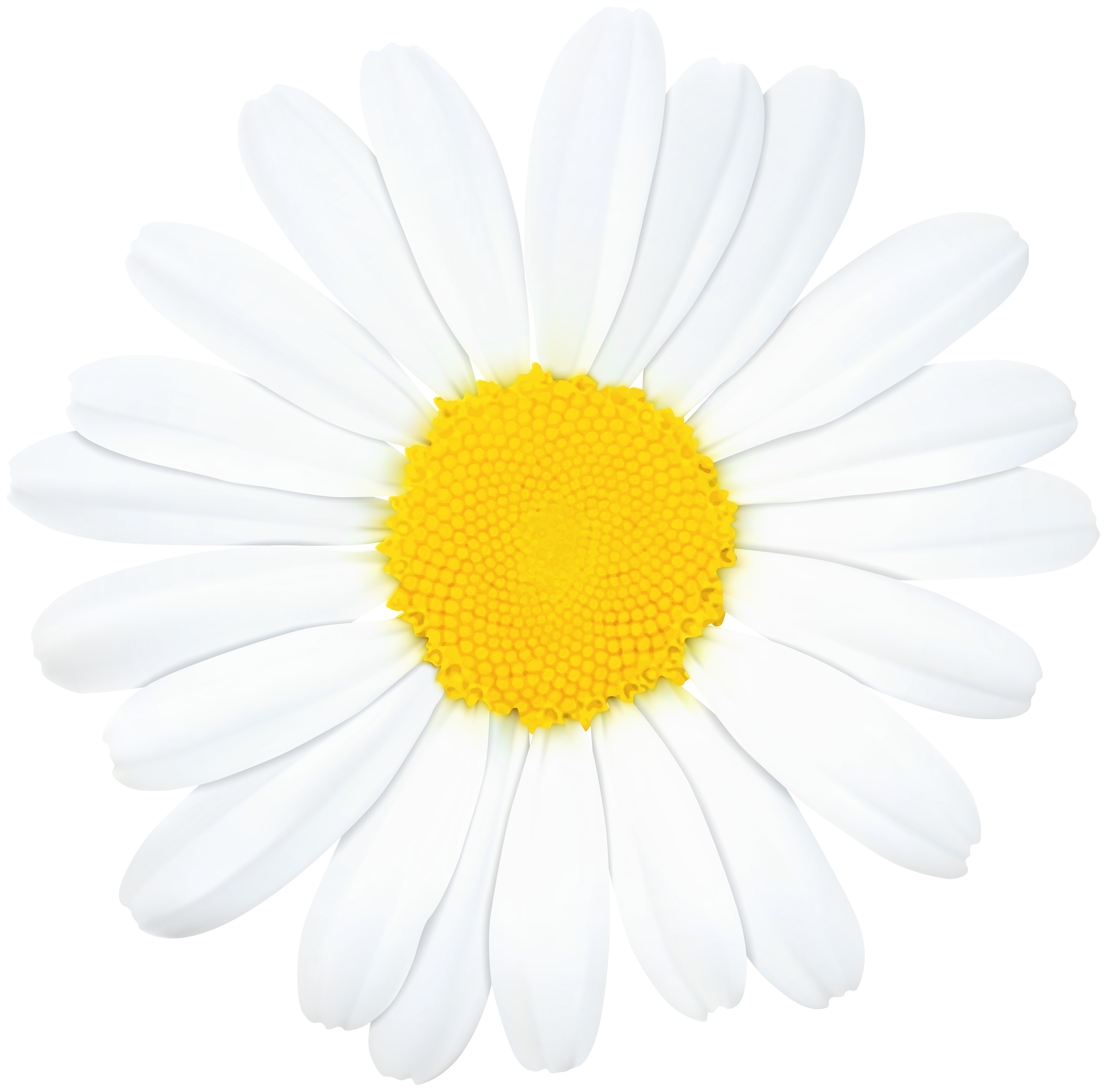Clip art image gallery. Daisy flower png