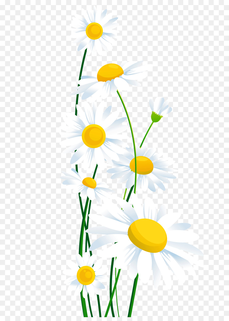 Daisy clipart. Common flower clip art
