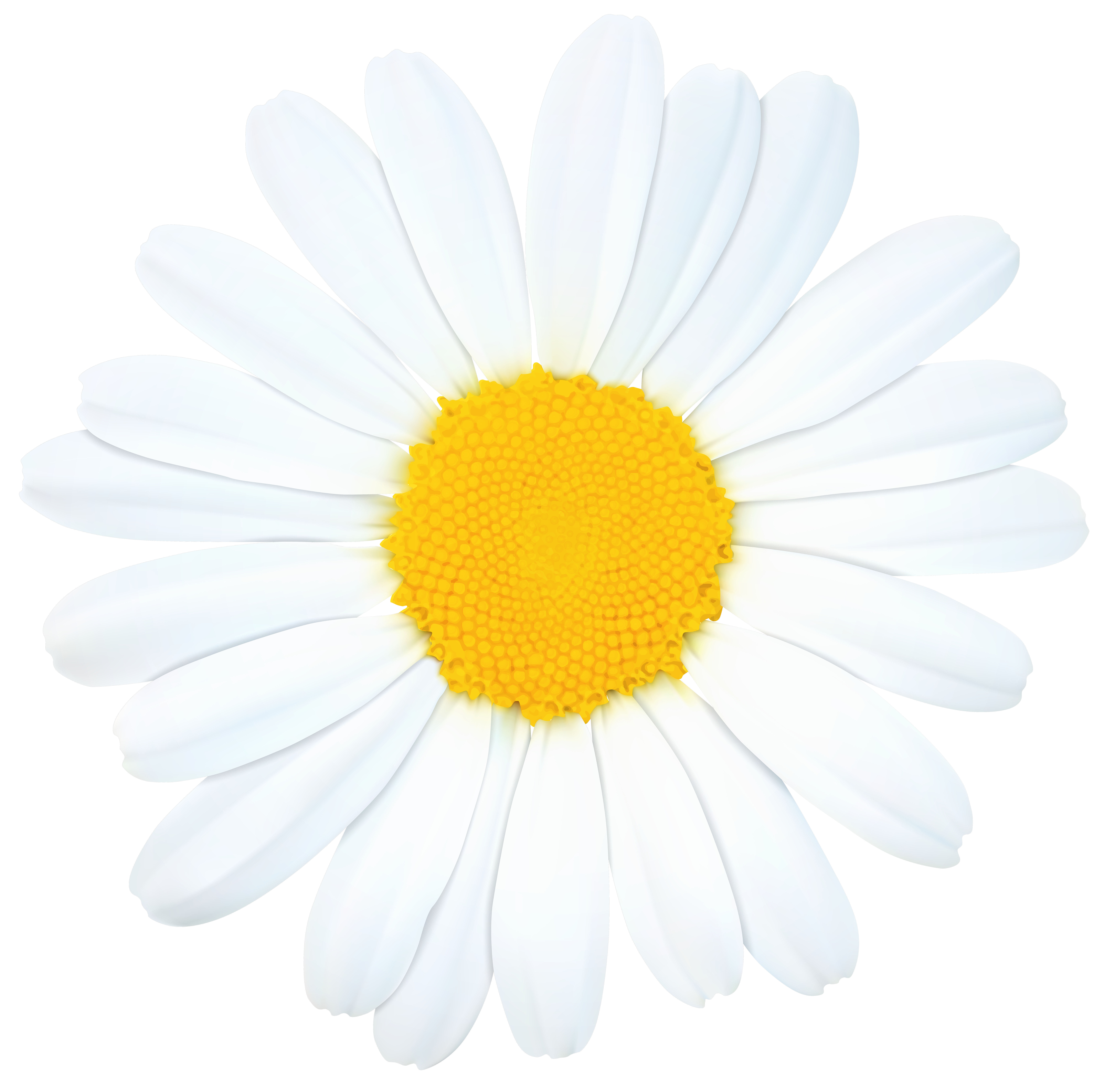 Png clip art image. Daisy clipart