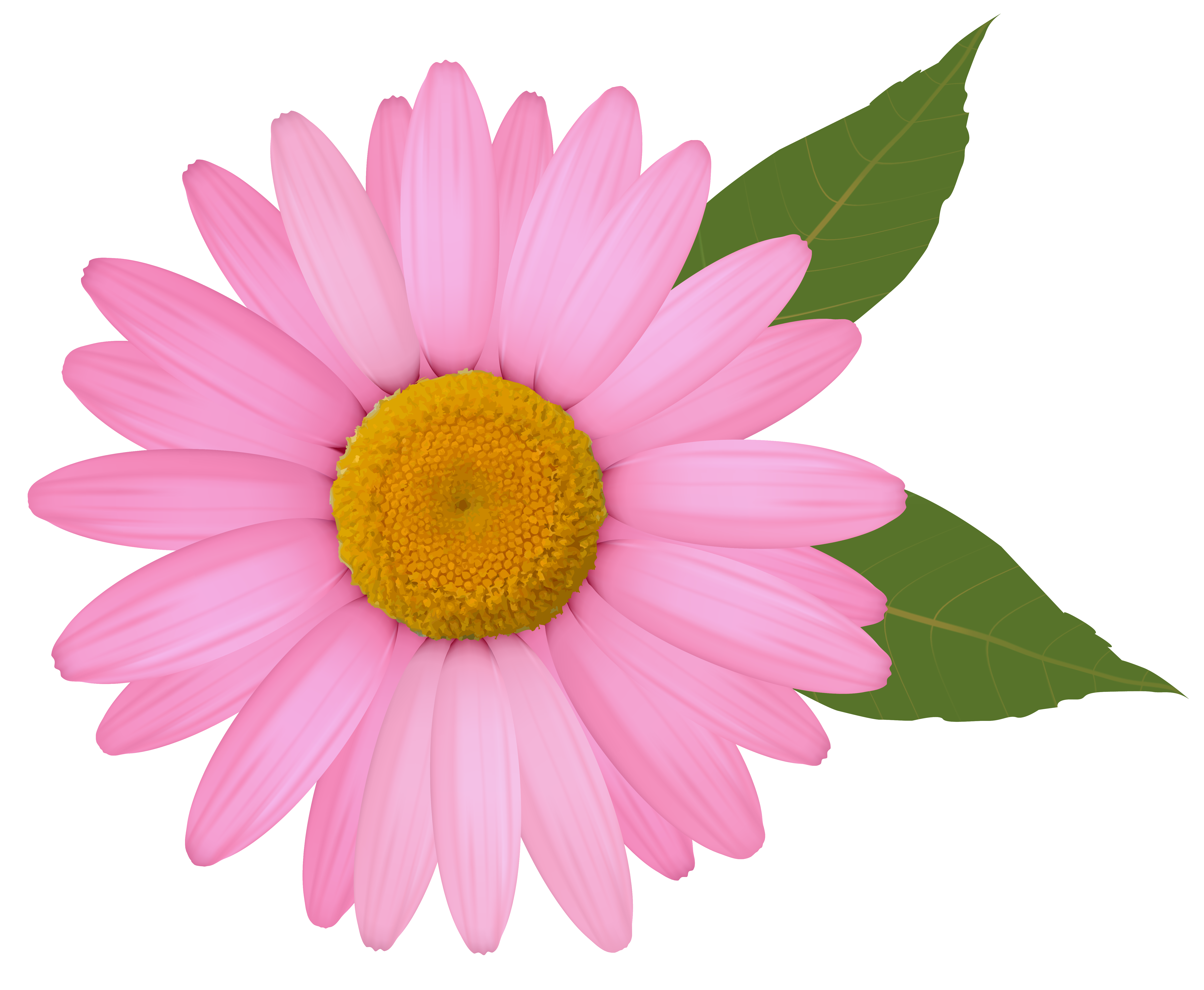Daisy clipart. Pink png image gallery