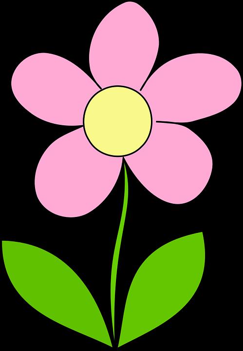 Daisy 8 flower