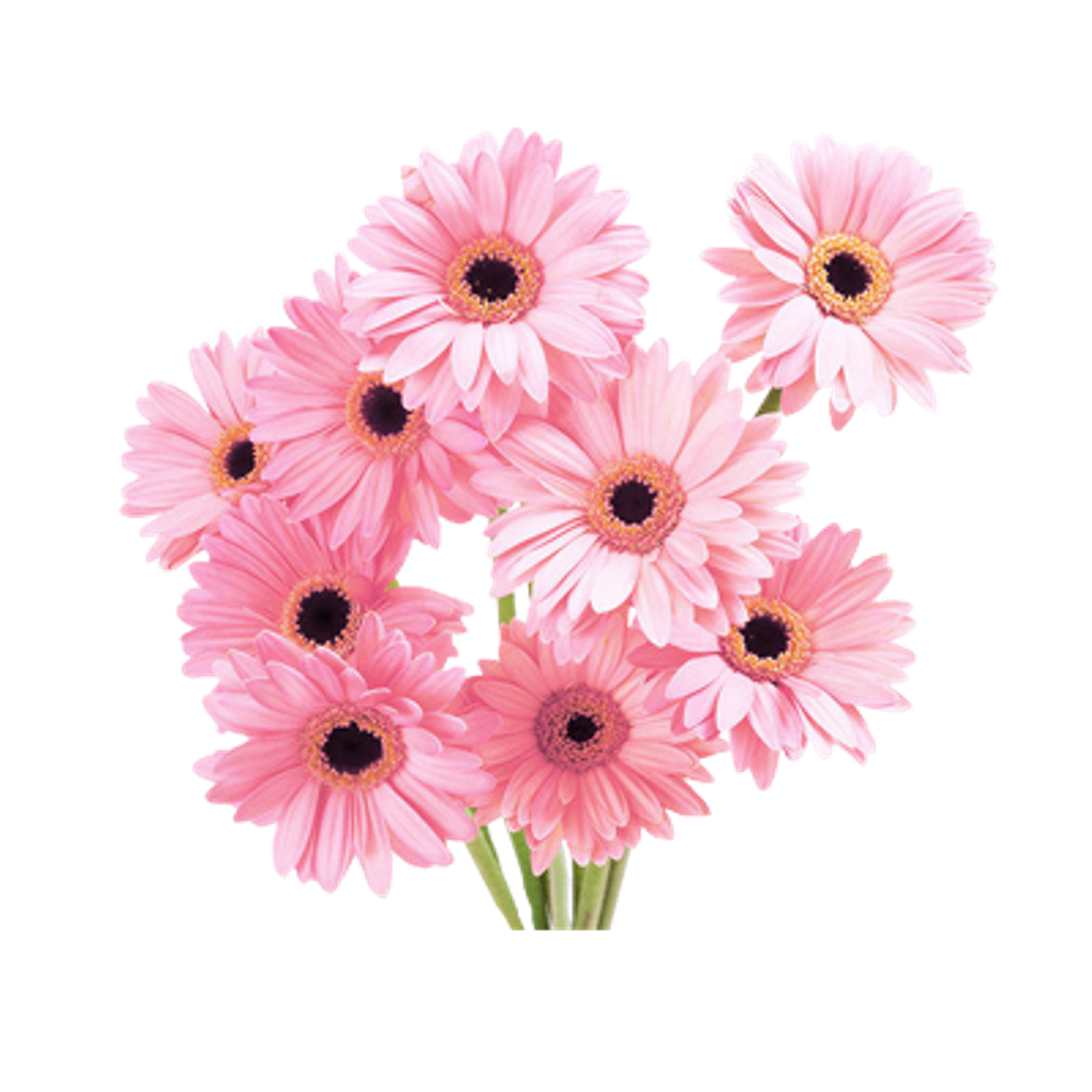 Daisy clipart aesthetic, Daisy aesthetic Transparent FREE ...