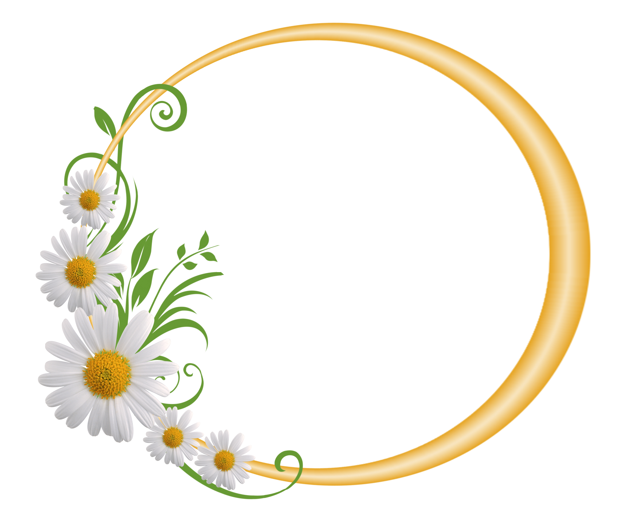 Yellow round with daisies. Circular frame png