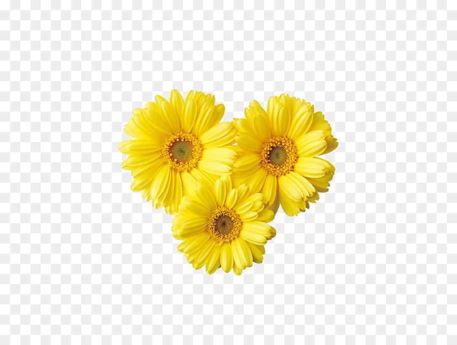 daisy clipart bright flower