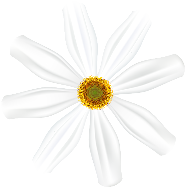 Gallery flowers png . Daisy clipart dais