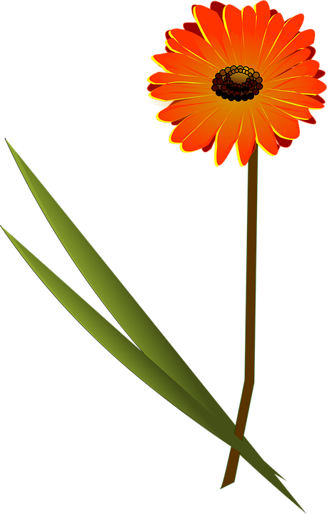 Daisy clipart dais. Frames illustrations hd images