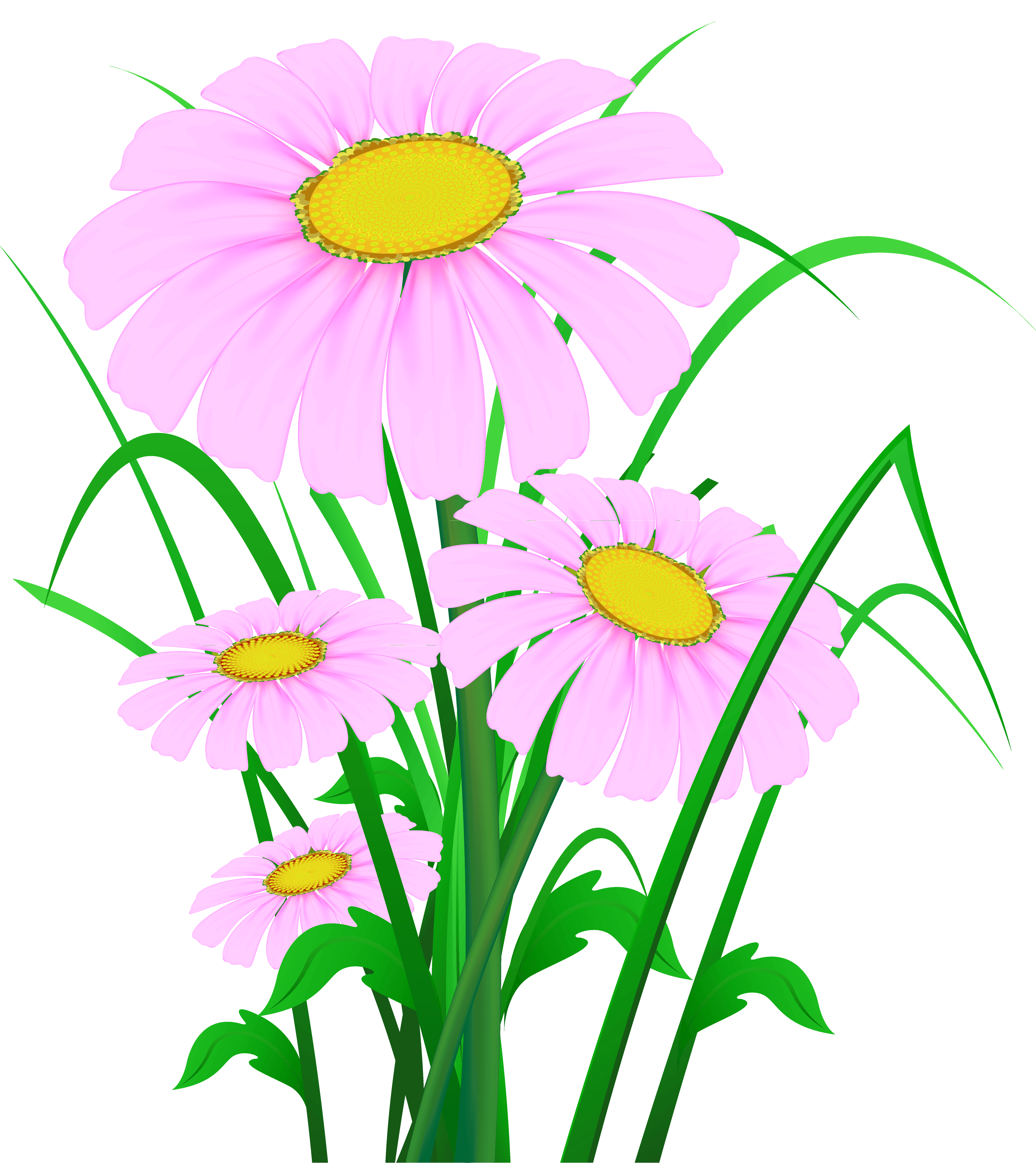 Transparent cliparts zone pink. Daisy clipart daisie