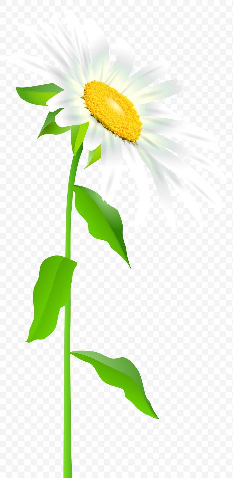 Common sunflower text leaf. Daisy clipart daisy leaves