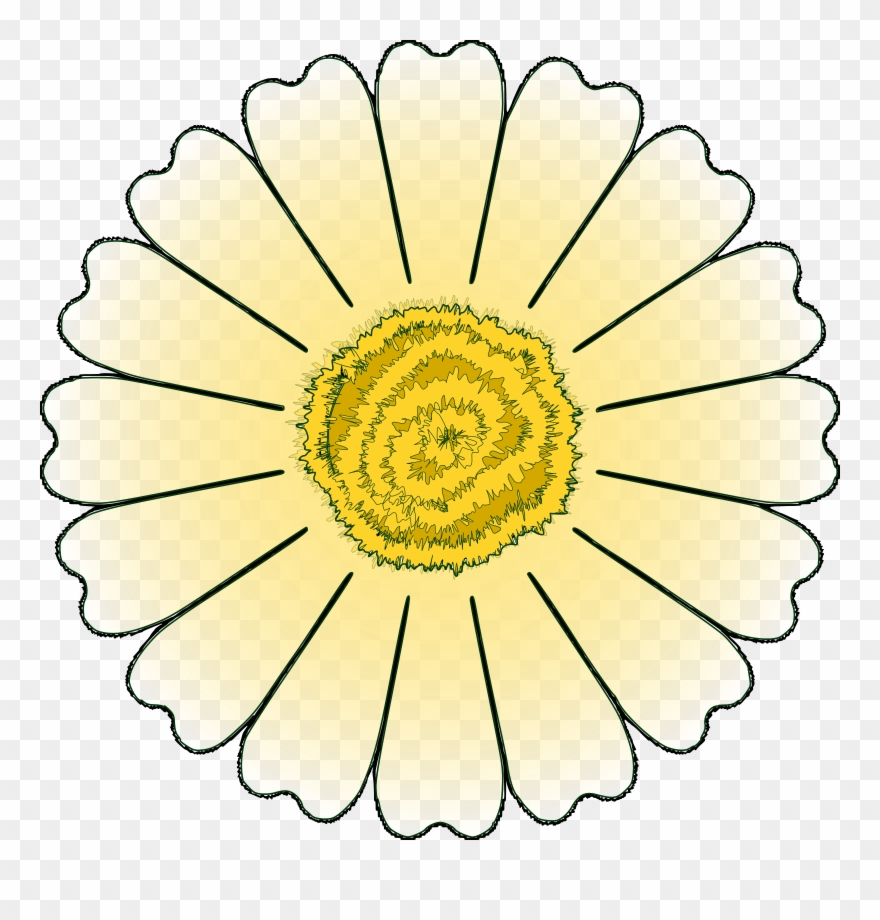 Flower outlines png download. Daisy clipart daisy petal