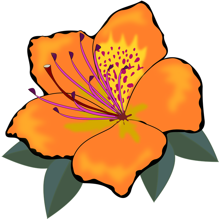 Hibiscus clipart cute. Flores group free vector