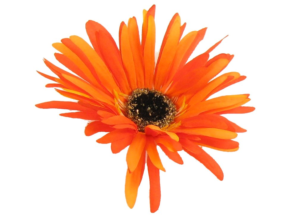 Free images download clip. Daisy clipart large flower