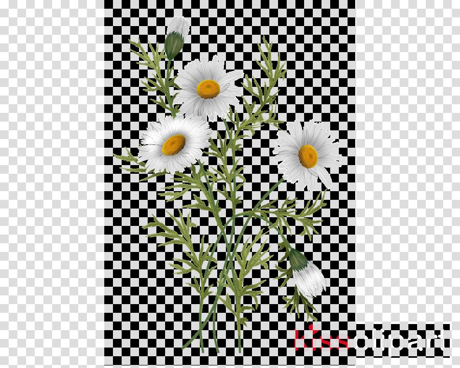 Background clip art . Daisy clipart nature transparent