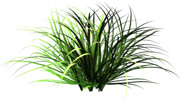 Download hd of png. Daisy clipart patch grass