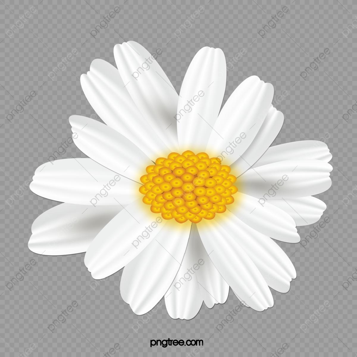 Daisy clipart small daisy. Flower simple