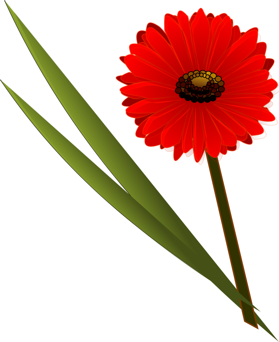 Collection of gerbera cliparts. Daisy clipart stem clipart