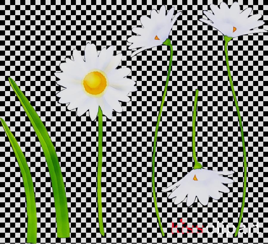 Daisy clipart stem clipart. Flower plant transparent clip