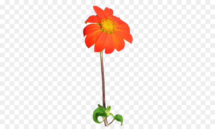 Daisy clipart stem clipart. Floral flower background plant