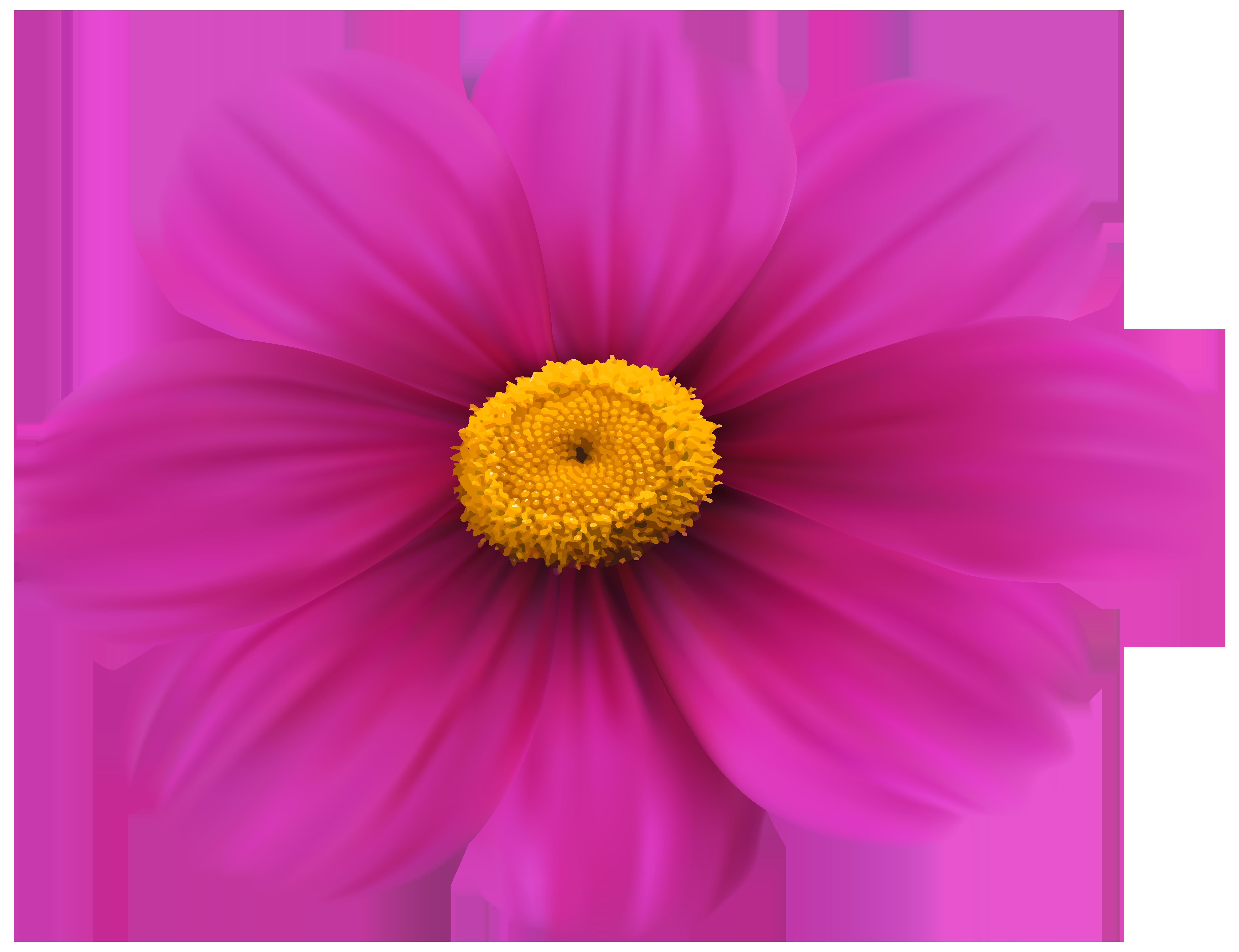 Flowers clipart money. Flower magenta purple violet