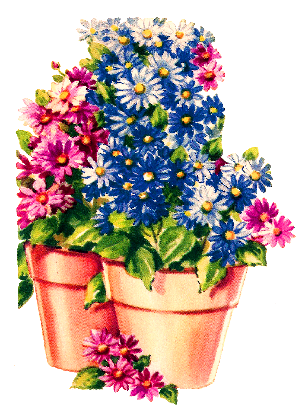 Antique images flower pot. Daisy clipart wildflower