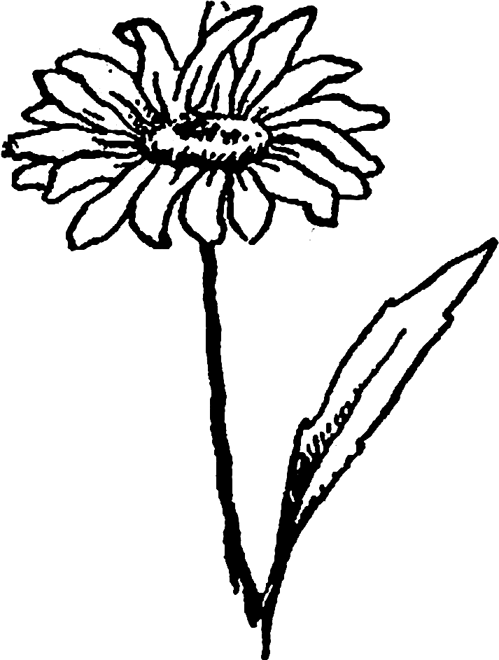 And the second image. Daisy clipart wildflower