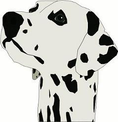 Dalmation head jpg. Dalmatian clipart