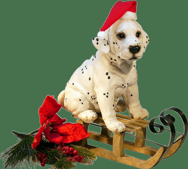 Dalmatian clipart christmas. Dog on a sledge