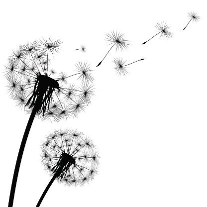 Illustrations vector images dandelions. Dandelion clipart