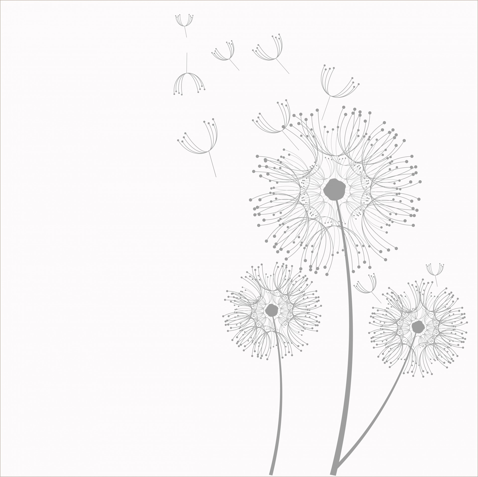 Dandelion clipart. Flowers free stock photo