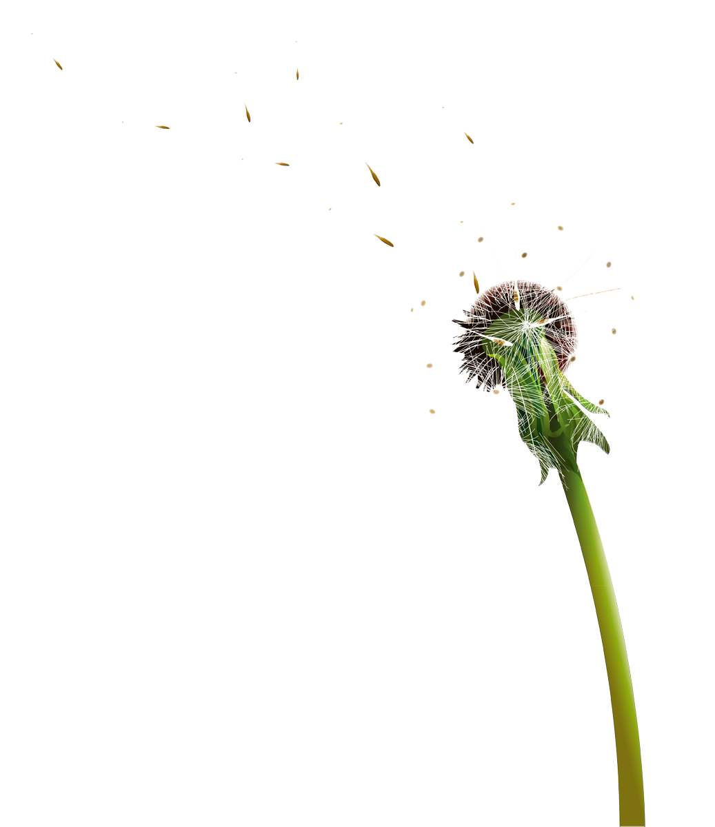 Banana graphics illustrations free. Dandelion clipart breeze