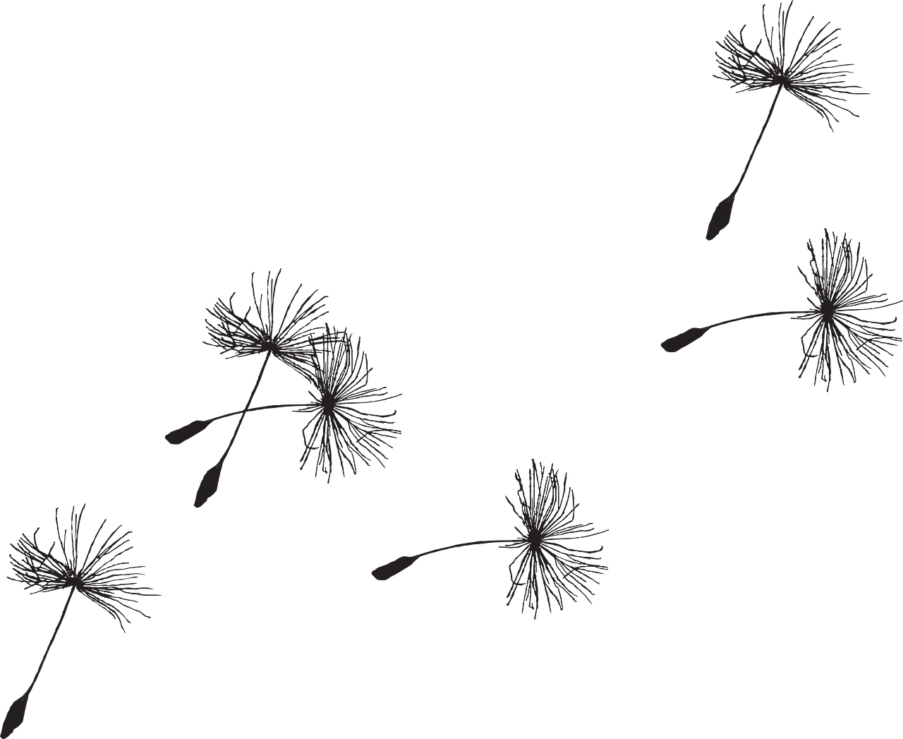 Dandelion clipart breeze.  collection of blowing