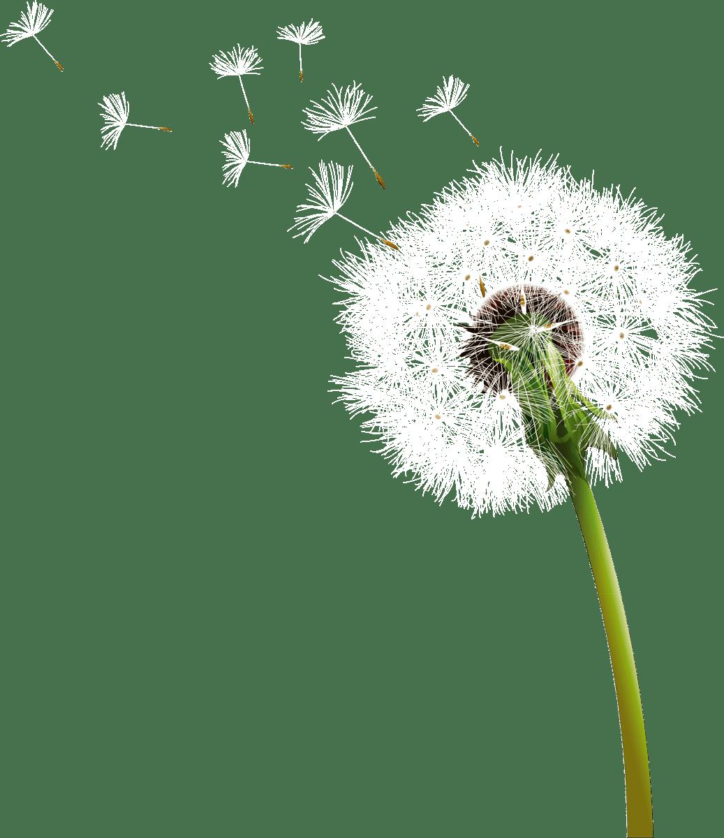Dandelion high resolution