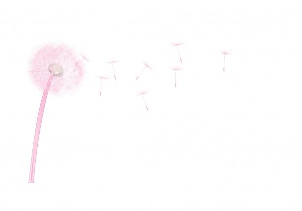 Seedhead free stock photo. Dandelion clipart pink dandelion