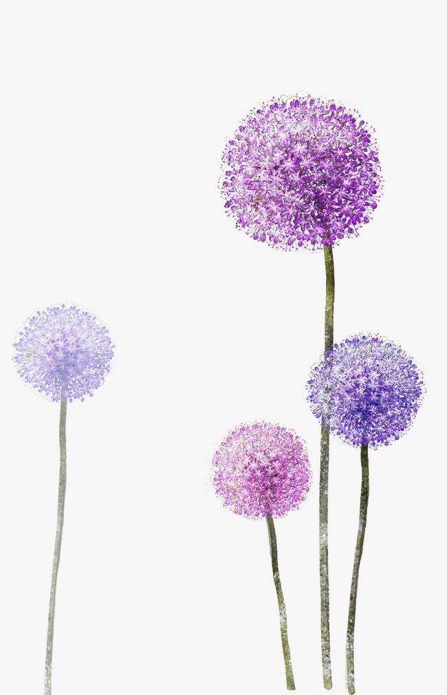 Flower png transparent . Dandelion clipart purple