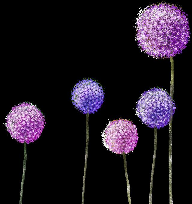 Flowers ftestickers. Dandelion clipart purple