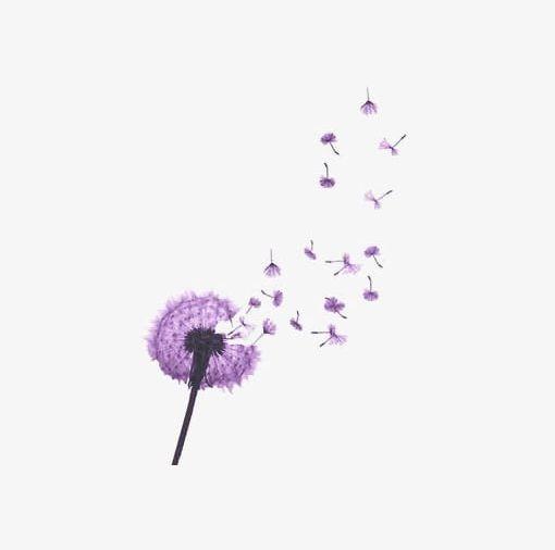 Dandelion clipart purple. Png botany button