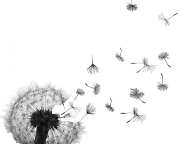 Dandelion clipart real. Free download clip art