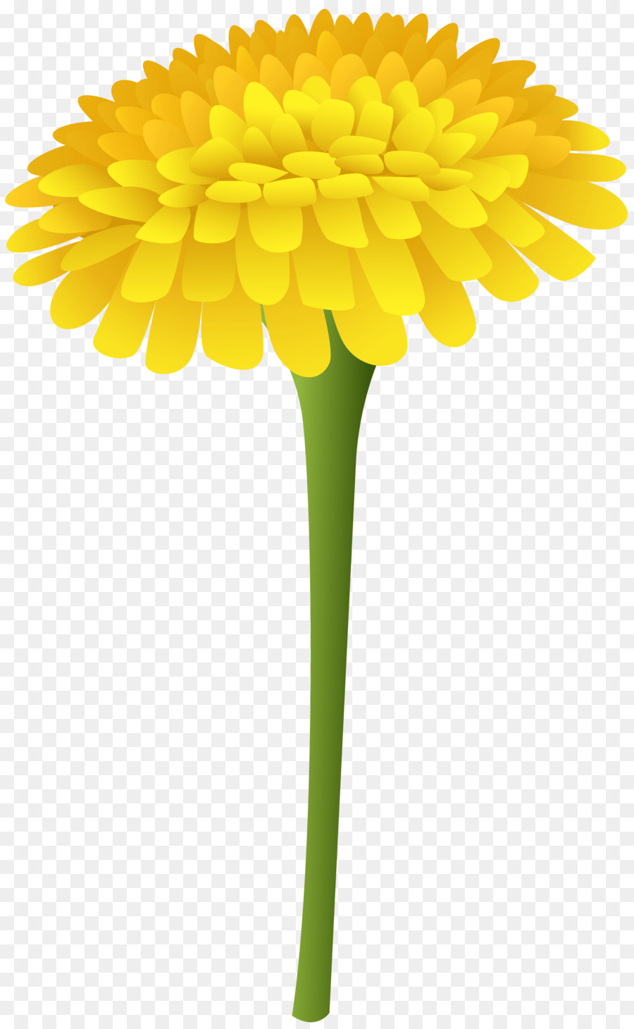 Flowers background flower . Dandelion clipart real