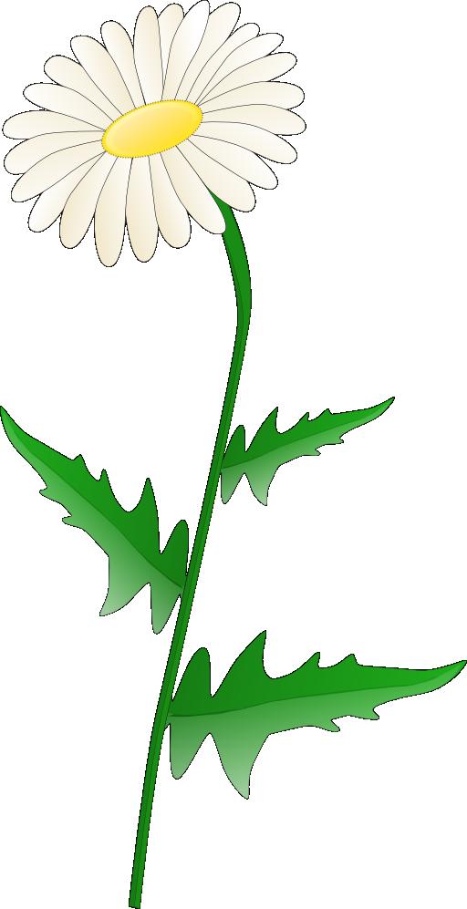 Daisy i public domain. Dandelion clipart royalty free
