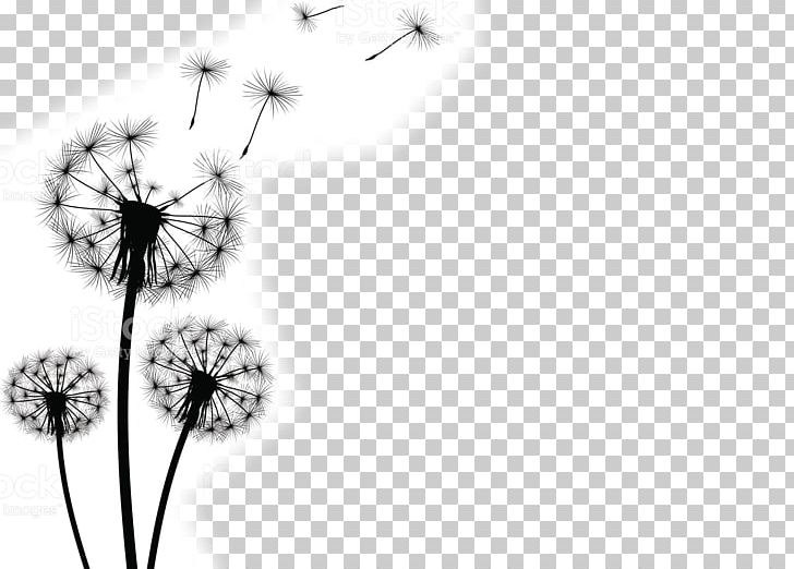 Common photography png artwork. Dandelion clipart stock photo