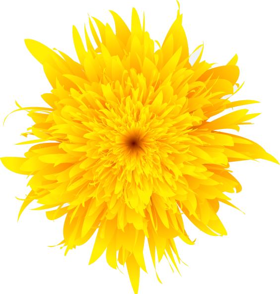 Dandelion sunflower