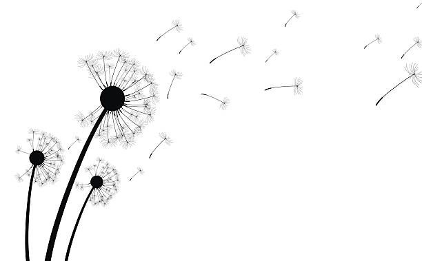 Dandelion clipart vector. Top clip art graphics