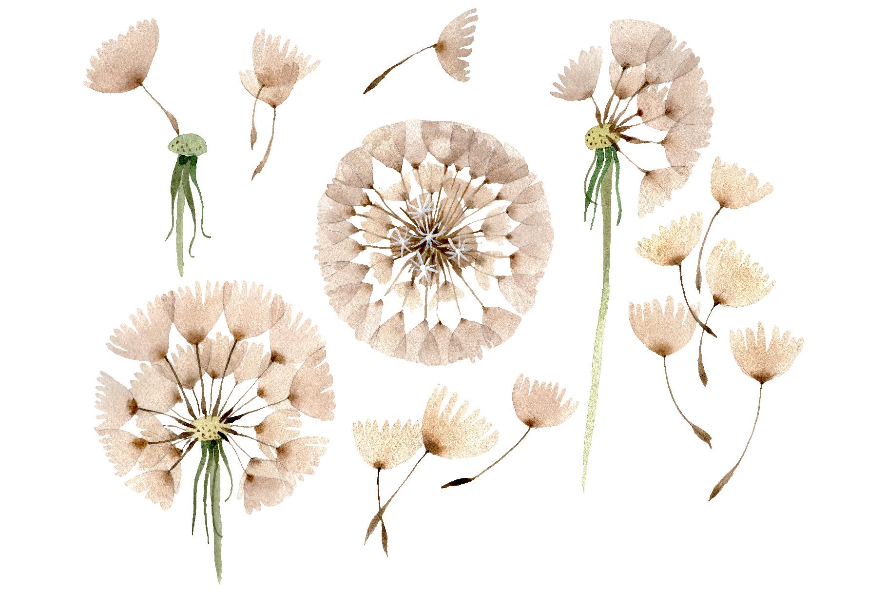 Dandelion clipart watercolor. Png
