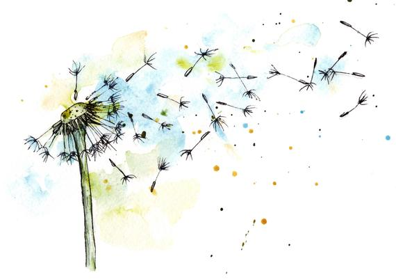 Commercial license botanical illustration. Dandelion clipart watercolor