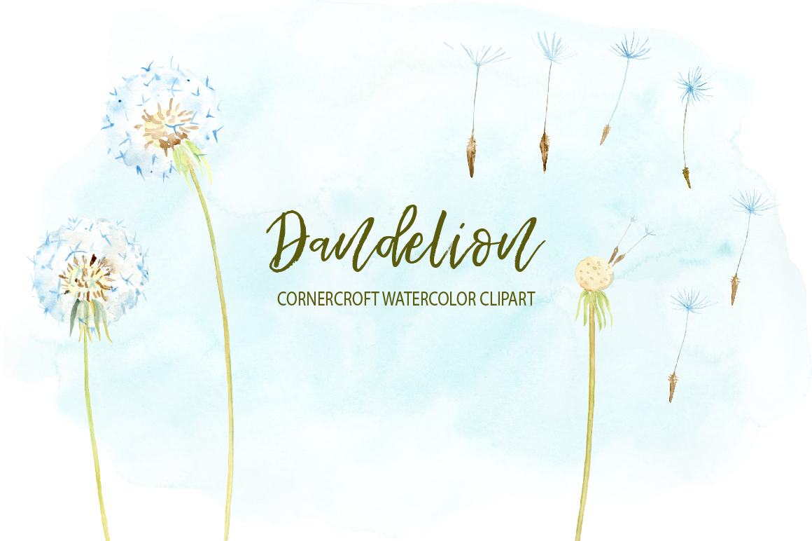 Dandelion clipart watercolor.