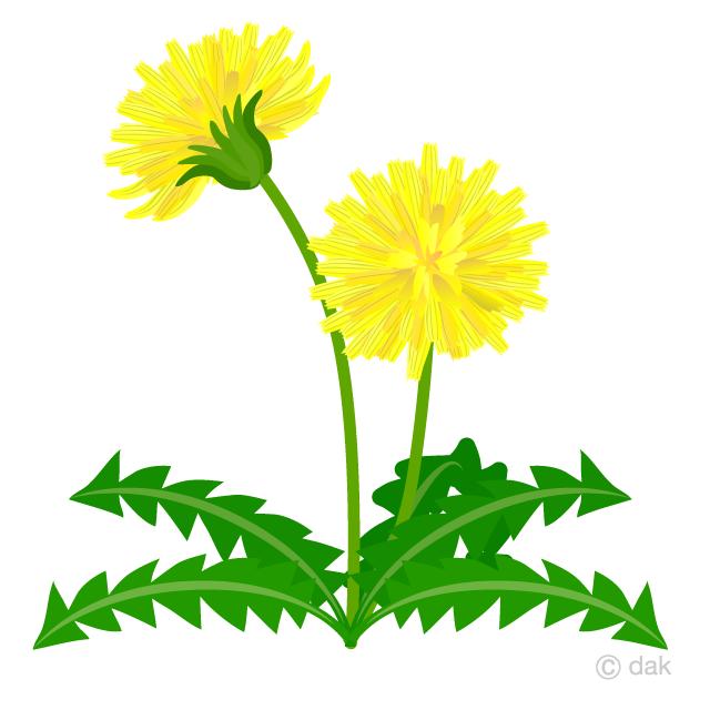 Flower free picture illustoon. Dandelion clipart wildflower