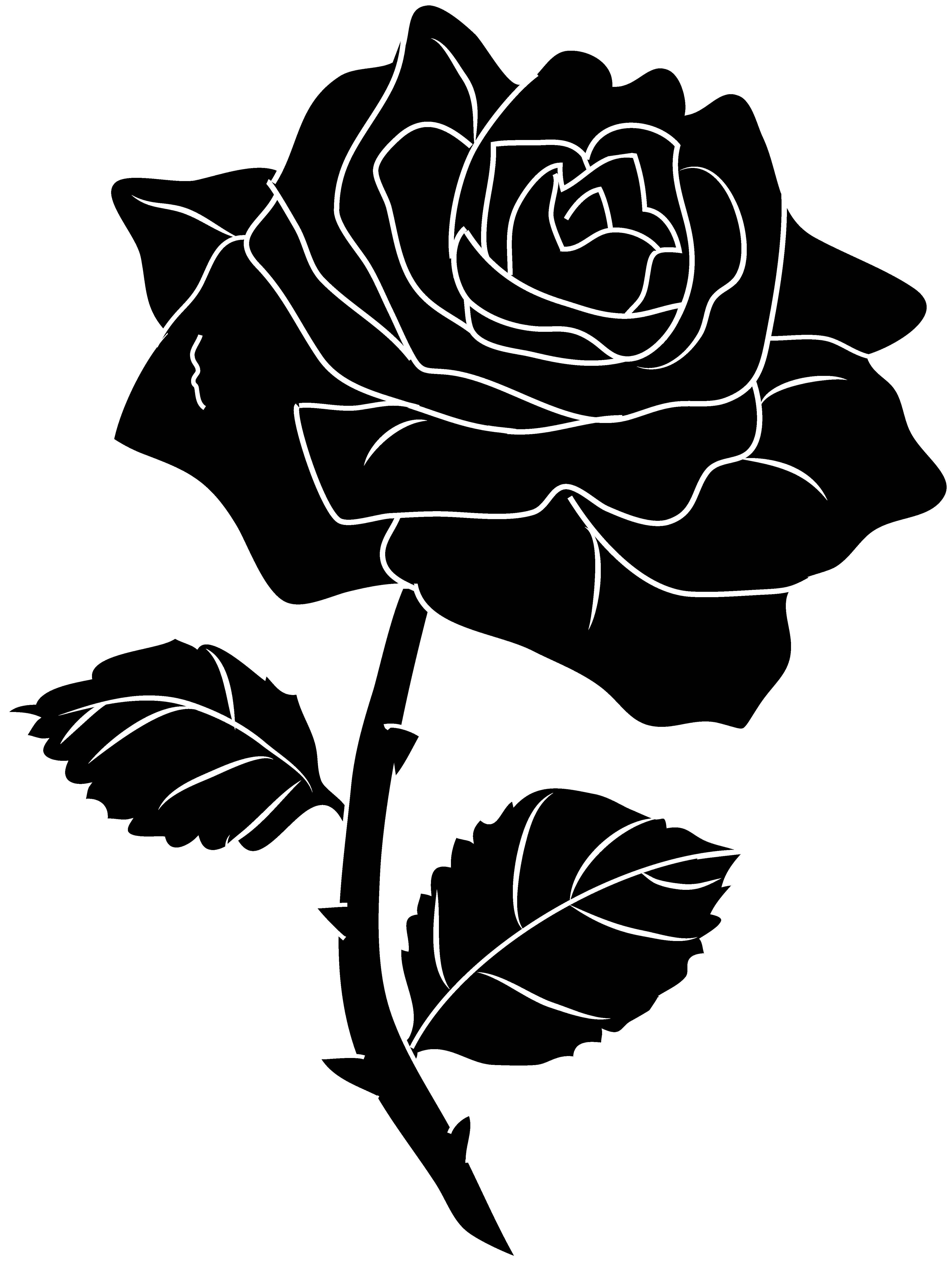 Rose black and white. Poinsettias clipart outline