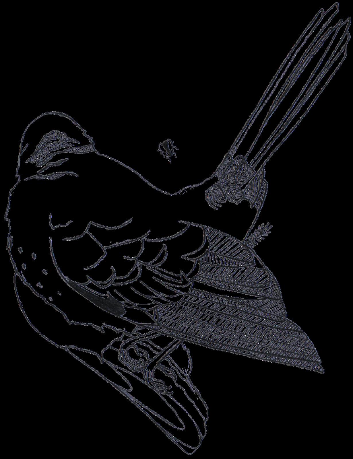 Dead bird drawing at. Quail clipart sketch