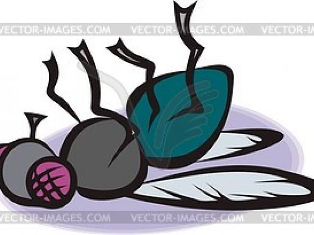Flies clipart dead fly. Free lizard download clip