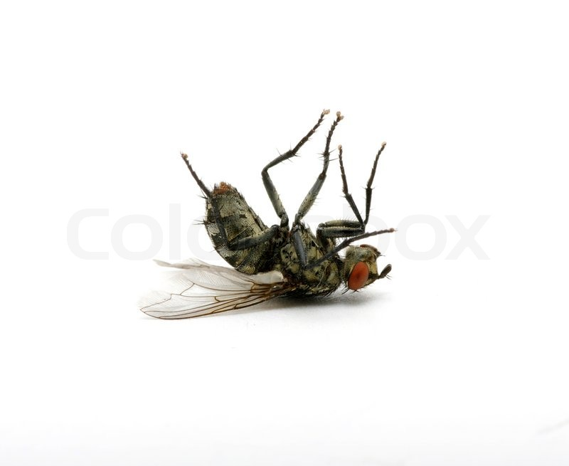 Free insects cliparts download. Flies clipart dead fly