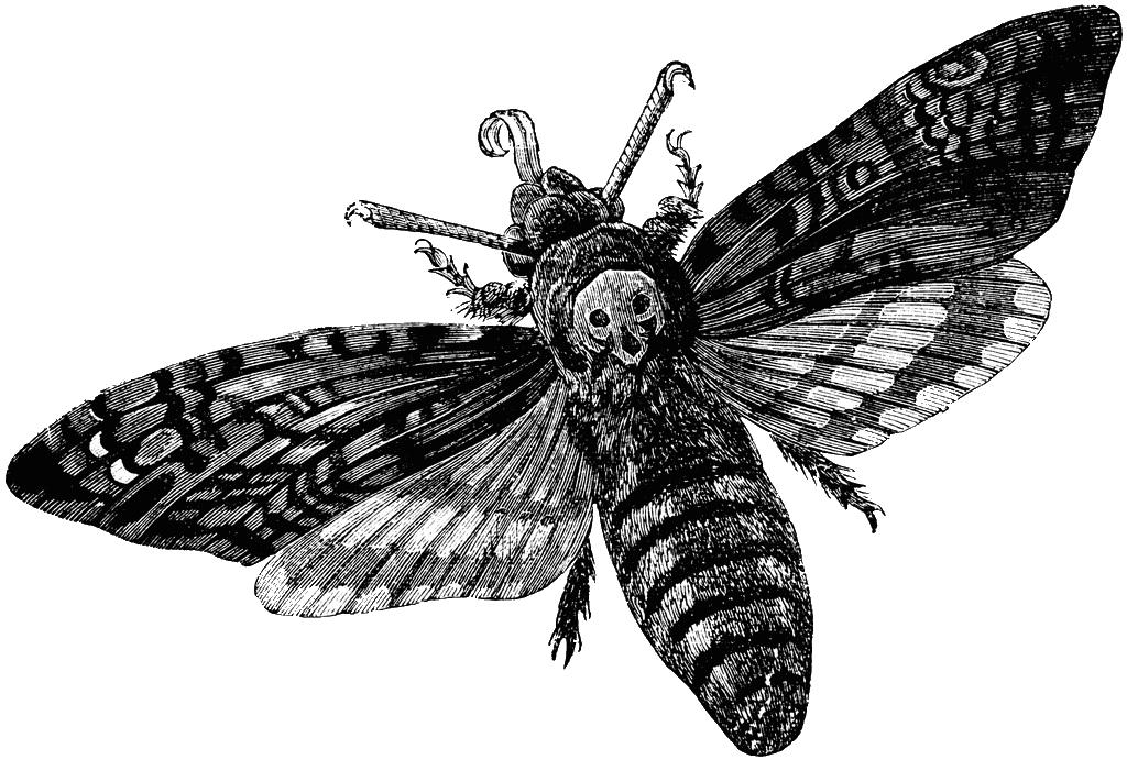 Moth clipart gypsy moth. Tumblr n joalxjok tu